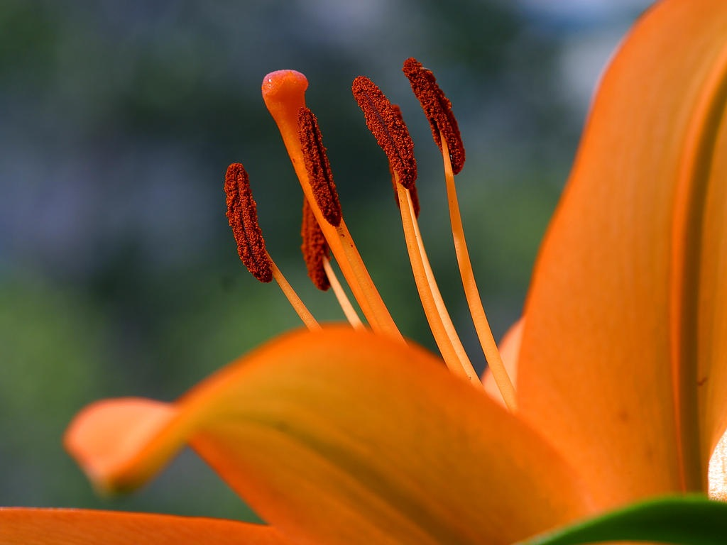 Orange :: Flowers By Nature