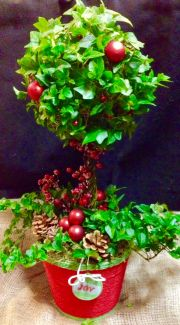 'Holiday Ivy topiary'