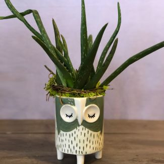 Hootie Aloe Planter