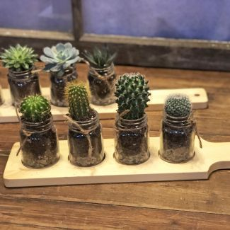 Flight of Cactus